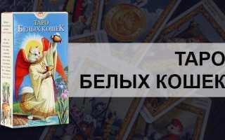 Обзор колоды Таро Белых Кошек: история создания, особенности, символы