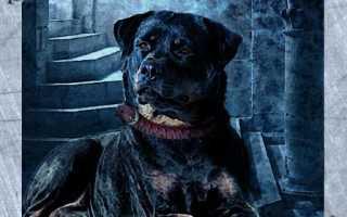 Собака Ленорман: значение и описание карты, сочетание с другими