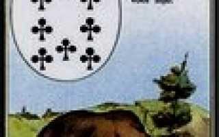 Медведь Ленорман: значение и толкование карты, сочетание с другими